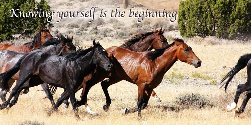 Horses-running2